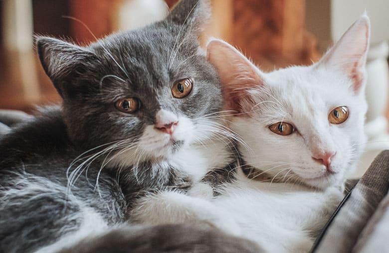How to Litter Train a Cat stressors