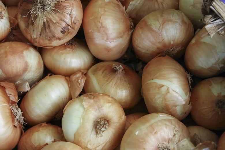 homemade cat food onions toxic