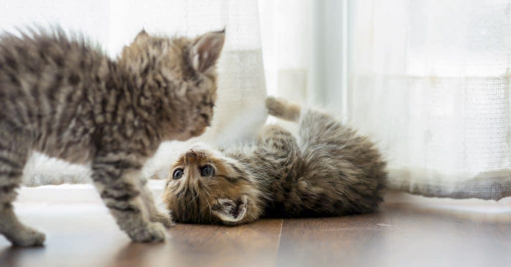 best kitten food
