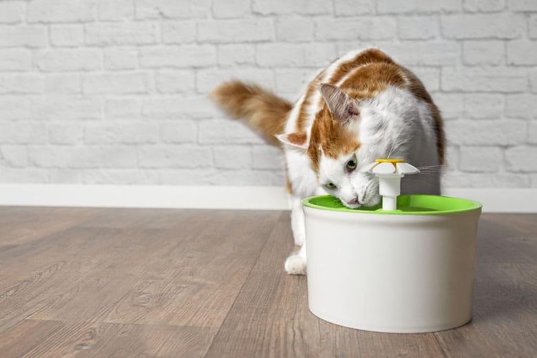 cat water fountain Catit
