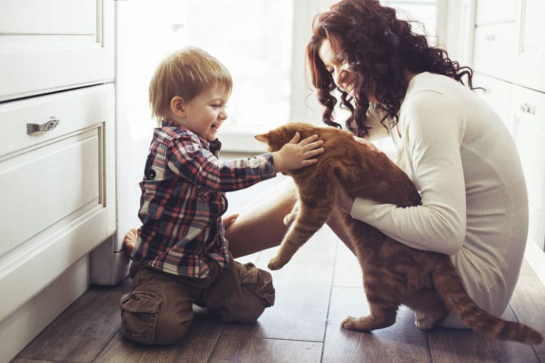 fiv in cats prevention