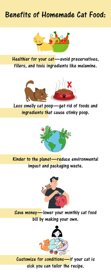 Homemade Cat Food Infographic