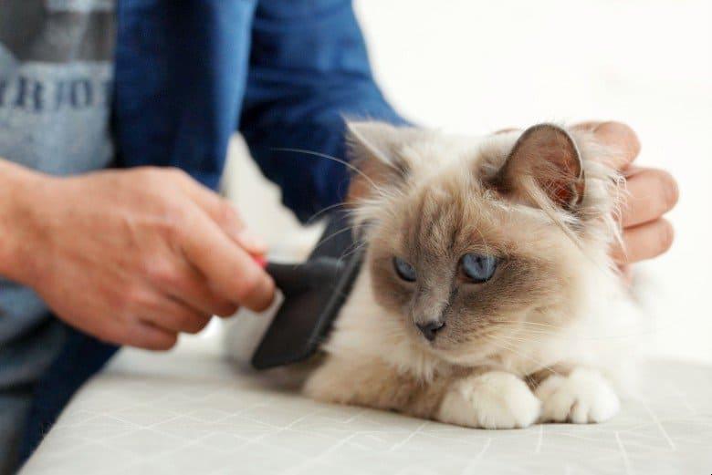 Cat diaper hygiene