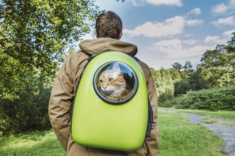 best cat carrier backpack
