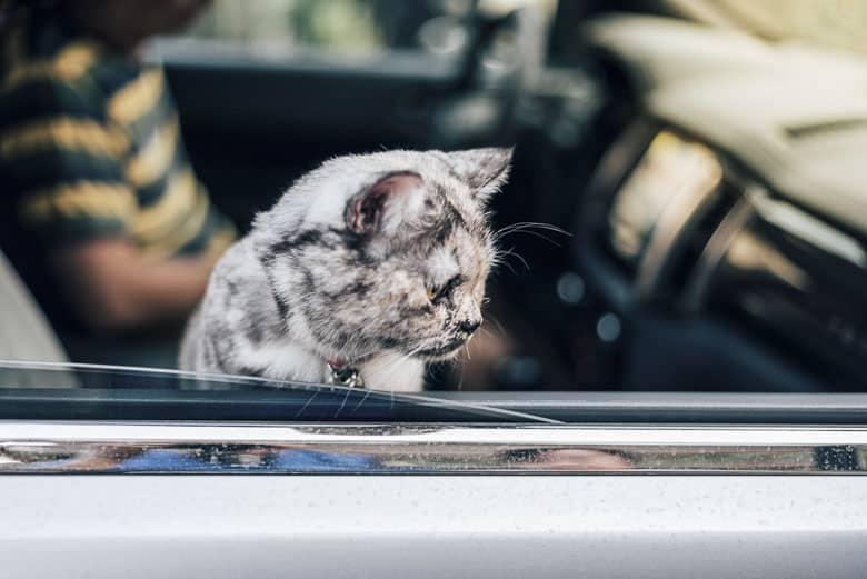 best cat carrier car travel