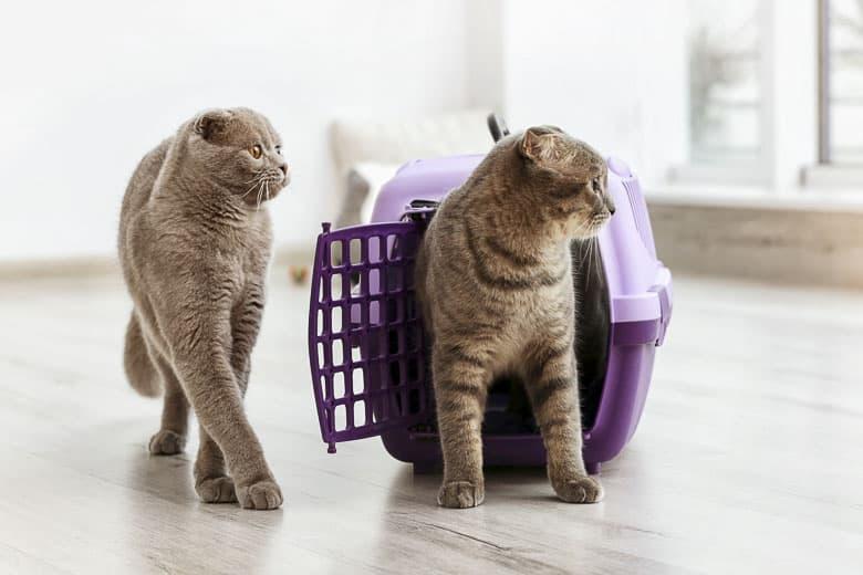 best cat carrier hard sided