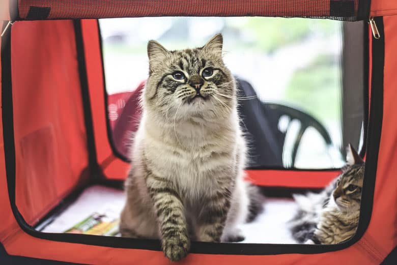 best cat carrier soft sided