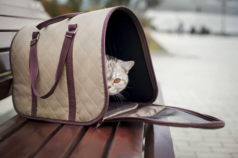 best cat carrier soft sides
