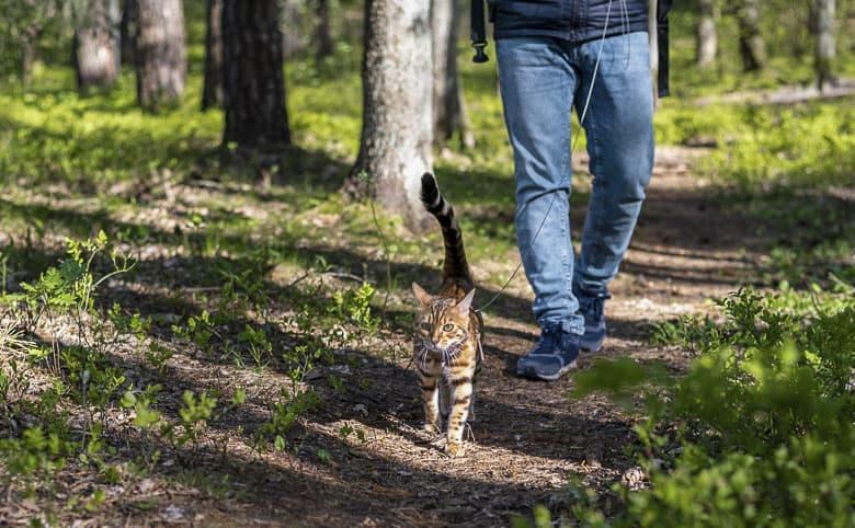 best cat harness outdoors