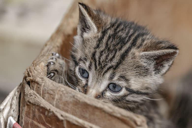 cat litter disposal system