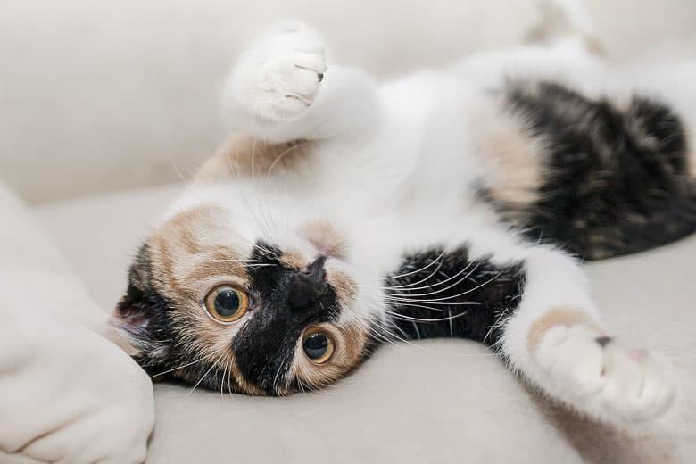 cat litter disposal system odor