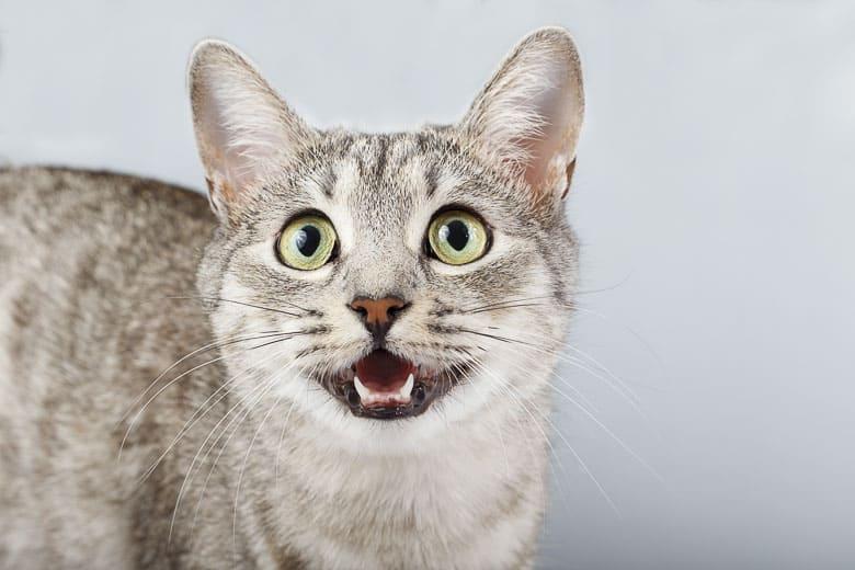 dust free cat litter asthma