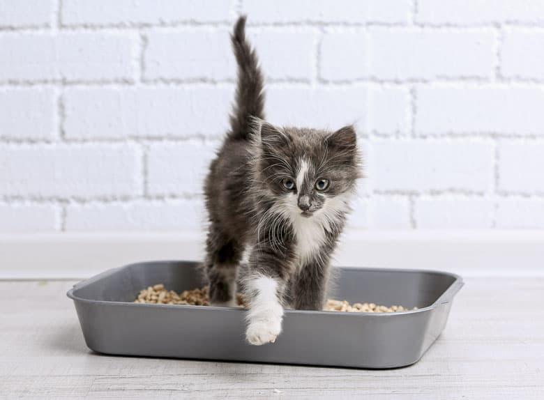 dust free cat litter kitten