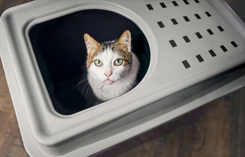 top entry litter box privacy
