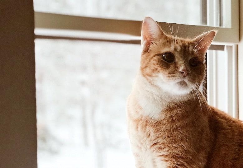 best grain free cat food allergies