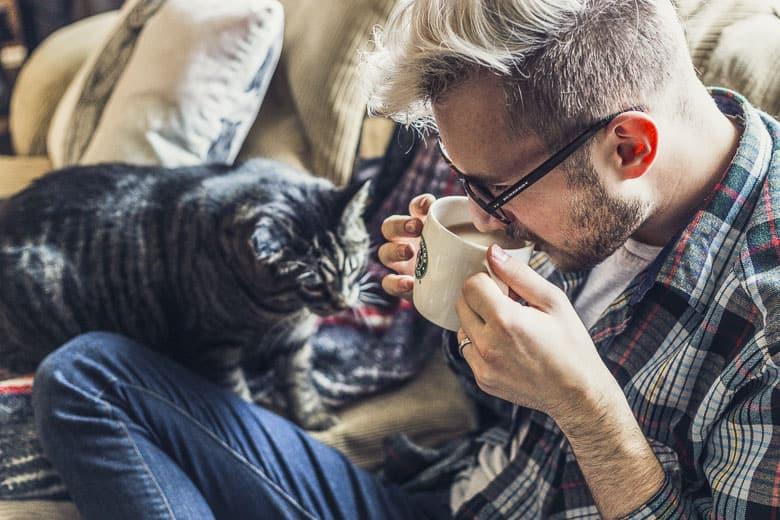 best grain free cat food low carb