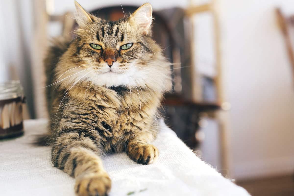 best raw cat food Taurine