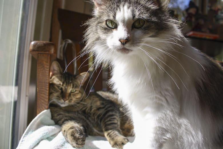 amazon automatic cat feeder