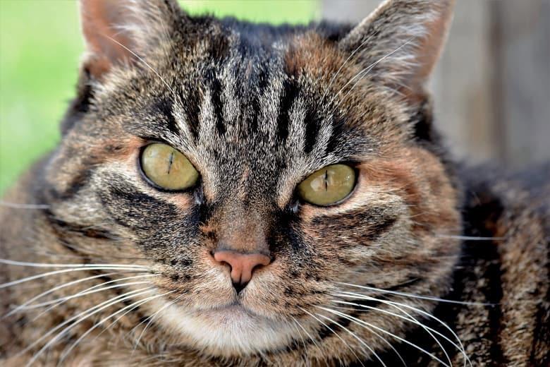 low carb wet cat food