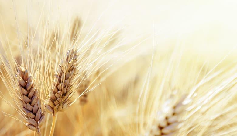 best-cat-food-for-ibd-grain-free