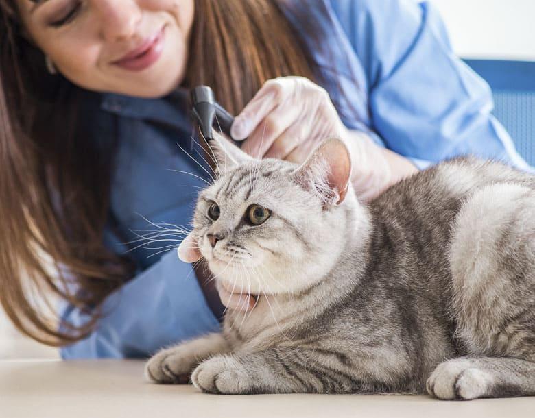 best dry cat food for senior cats health exam