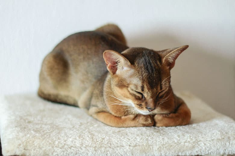 best food for cats with ibd