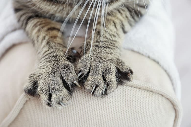 Cat nail clippers for indoor cats