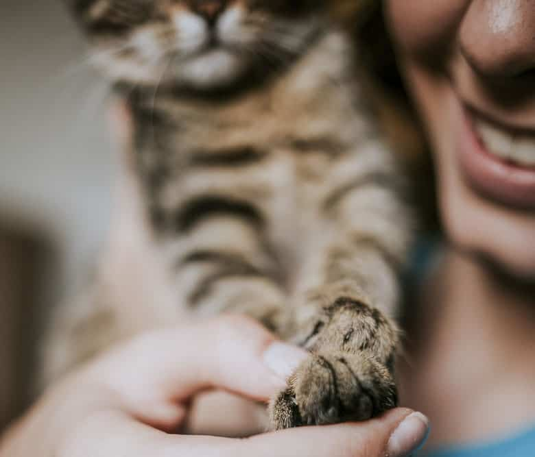 best nail clippers for cats and kittens