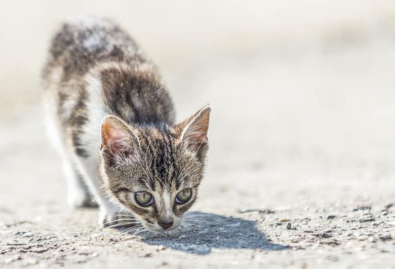 high calorie cat food kitten
