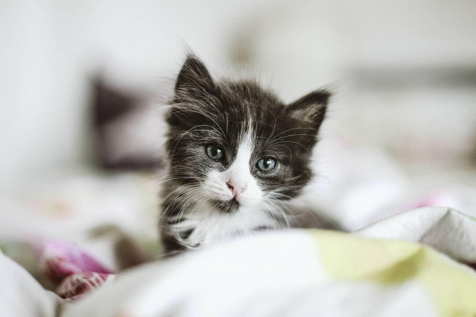 soft cat food kitten