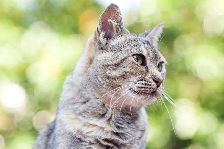 best cat food for diabetic cats