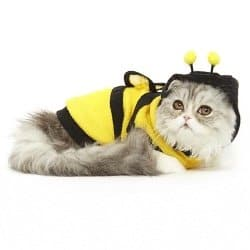cat costumes for cats