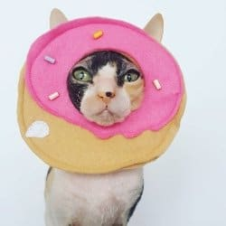 funniest cat costumes
