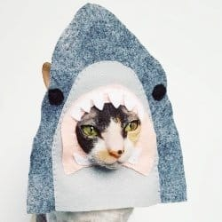 halloween cat costumes for cats