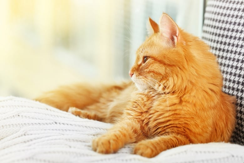 soulistic cat food recall