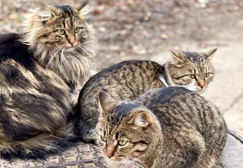 abound cat food recall
