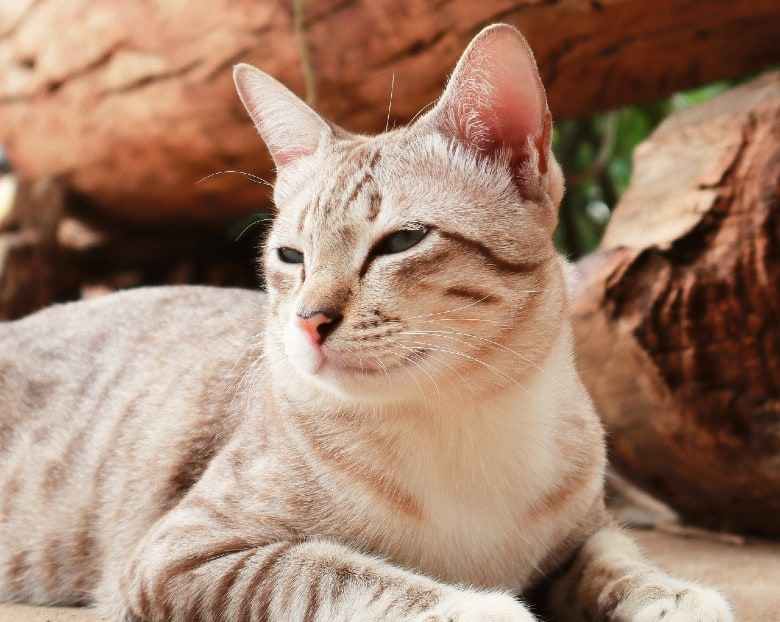 abound cat food reviews