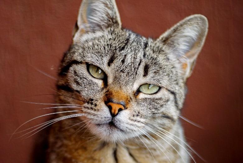 applaws cat food reviews