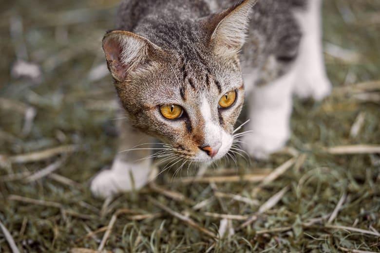 blue wilderness cat food