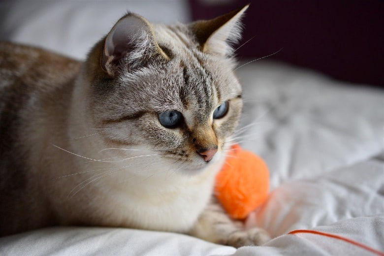 orijen cat food reviews treats