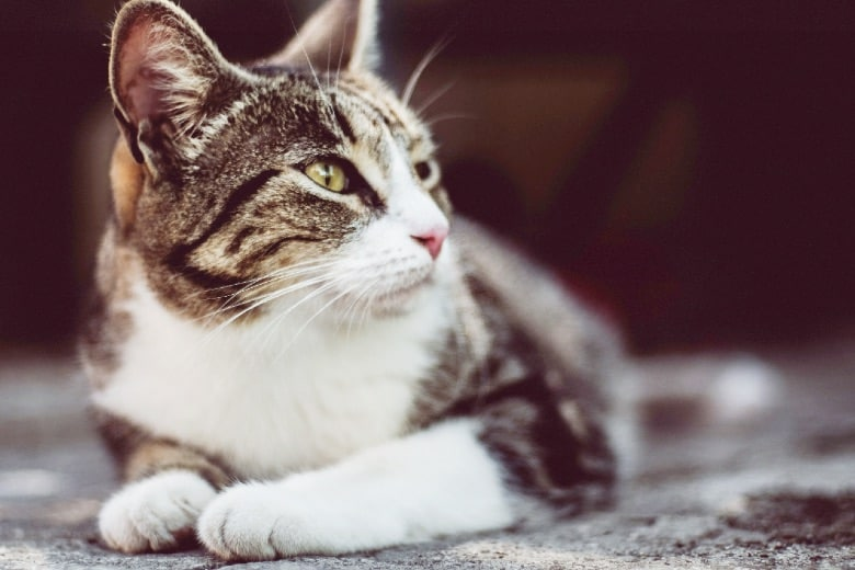 wholehearted cat food alternatives