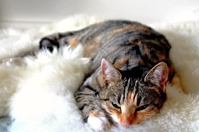 cat christmas catnip