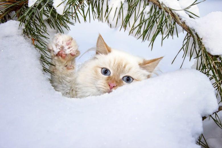cat christmas snow angel