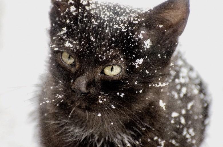 cat christmas snow kitten