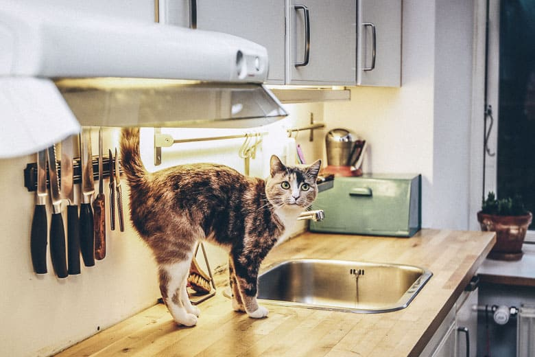 How can I treat my cats UTI at home remedy herbs