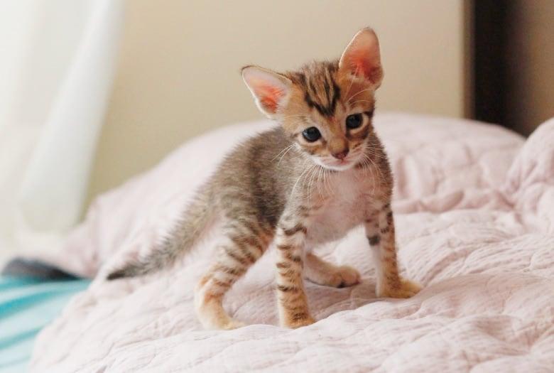 grain free kitten foods
