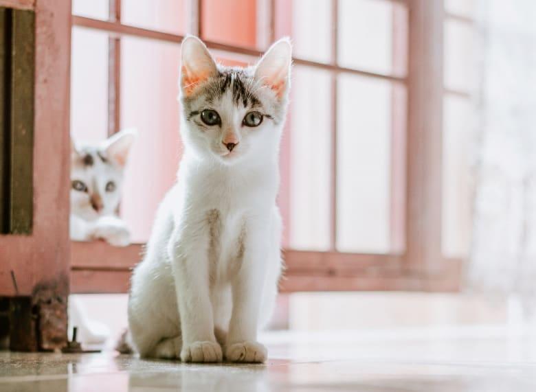 modkat litter box kittens