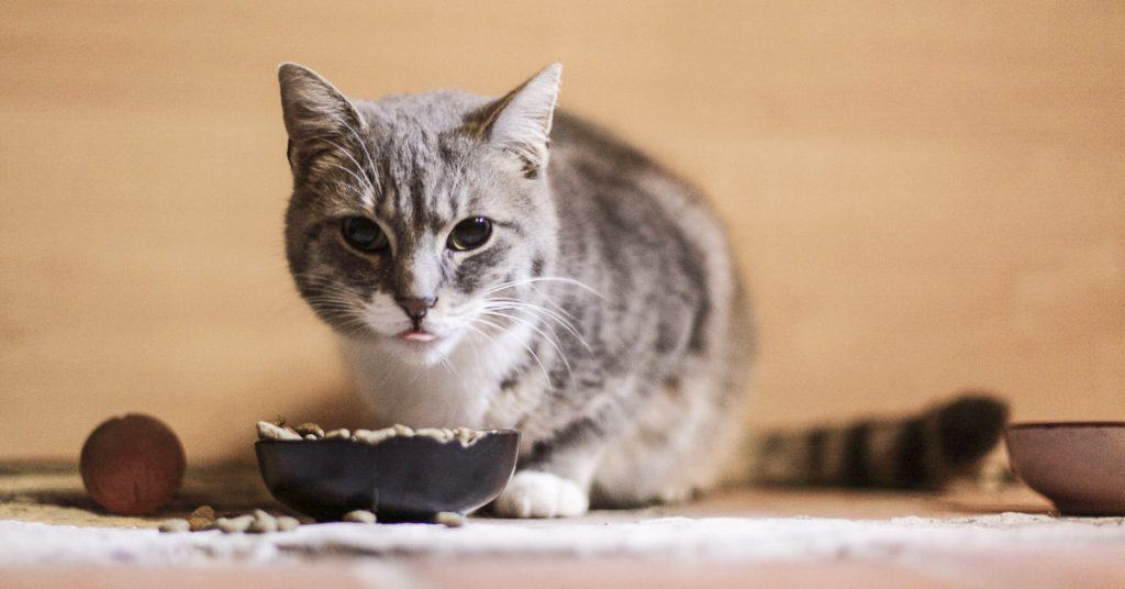 How long can cats go without eating?