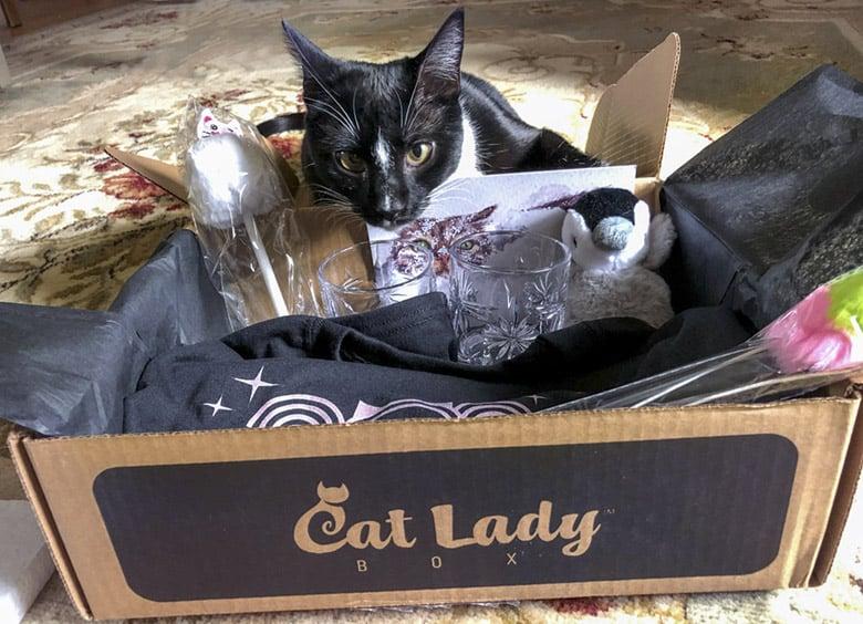 catladybox