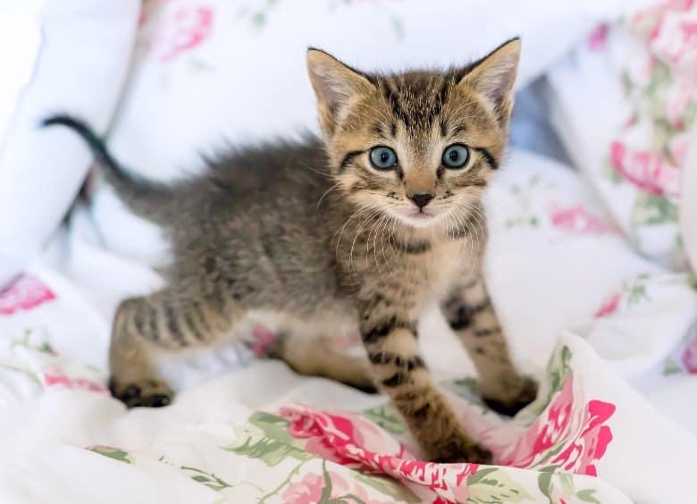when do cats stop growing male kitten